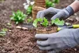 Как правильно сажать деревья на участке схема