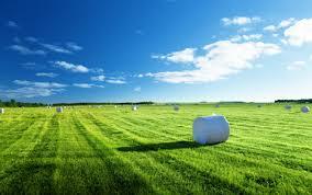 Как посадить абрикосовое дерево