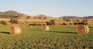Все о болезнях листьев каучуконосного фикуса