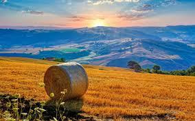 Туалет в дачном доме с унитазом