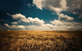 Орхидея мильтония: виды и уход в домашних условиях