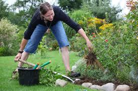 Что можно сделать с черноплодной рябиной