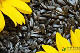 Шелуха от семечек как удобрение как применять