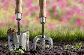 Лилия комнатная луковичная уход в домашних условиях