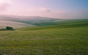 Какие многолетние цветы можно посадить в тени
