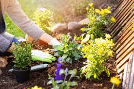 Как красиво посадить цветы в палисаднике