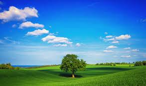 Зола это какое удобрение азотное или фосфорное