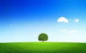 Что представляет собой шляпка и ножка гриба