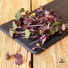 Как вырастить конский каштан из ореха дома