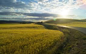 Как сажать арахис в открытый грунт