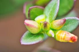 Внесение удобрений осенью под виноград