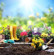 Комнатные цветы жених и невеста как ухаживать
