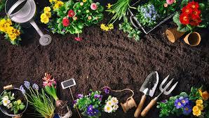 Как сажать яблони если близко грунтовые воды