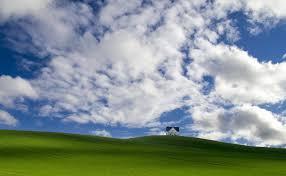 Почему лимон сбрасывает плоды что делать