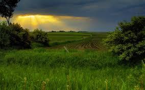 Разведение пчел на дачном участке