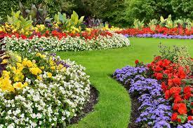 Как вырастить ананас дома из верхушки