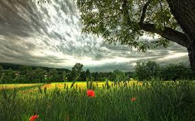 Что значит ампельное растение