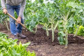 Как завалить дерево в нужную сторону