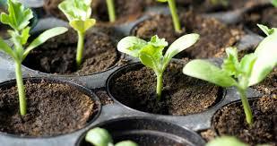 Продать комнатные цветы через магазин