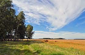 Картофель в соломе вырастить ведро с куста