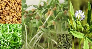 Хоста «Оранж мармелад»: описание, посадка, уход и размножение
