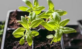 Как правильно посадить комнатные цветы в горшок
