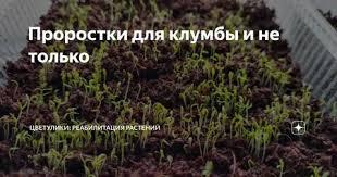 Какие цветы можно посадить под яблоней