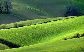 Что делать, если амариллис не цветет?