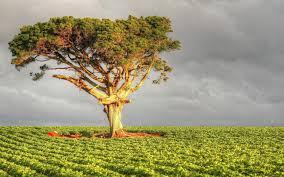 Чем отличается перлит от вермикулита