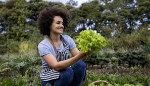 Гидрошарики для цветов как использовать