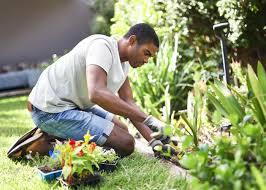 Белые сорта флоксов