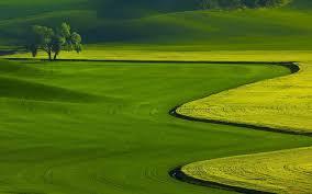 Где растет фисташковое дерево