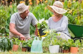 Вишня цветет но не плодоносит что делать