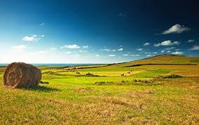 Многолетние цветы для сибири неприхотливые