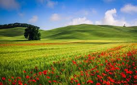 Перлит или вермикулит что лучше для растений
