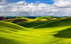 Какие пряные травы можно вырастить на огороде