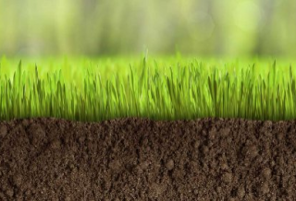 Какую газонную траву лучше посадить на даче