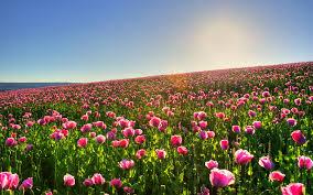 Купила орхидею фаленопсис что делать дальше