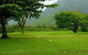 Как посадить жасмин весной
