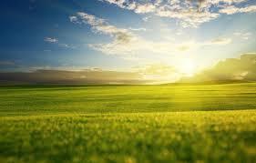 Влаголюбивые плодовые деревья и кустарники для дачи