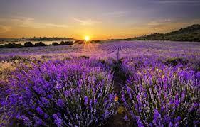 Что можно сделать с зелеными помидорами