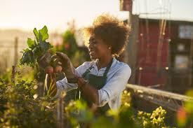Как правильно выращивать клубнику в открытом грунте