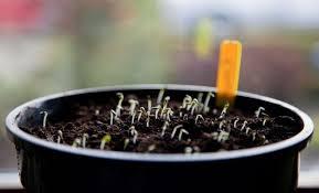 Все о кактусах: описание, виды и выращивание