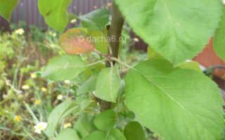 Какие фруктовые деревья нельзя сажать рядом