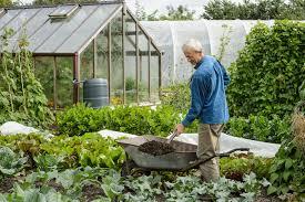Формула цветка редьки посевной