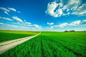 Древесная зола как удобрение для комнатных растений