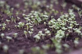 Кодиум цветок уход в домашних условиях