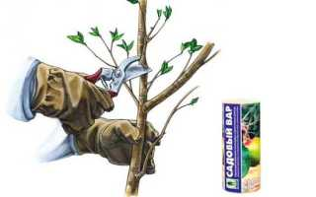 Состав садового вара для деревьев