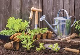 Чем подкормить хлорофитум в домашних условиях