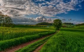 Комнатные растения для спальни какие лучше всего